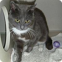 Adopt A Pet :: Greyson - Hamburg, NY