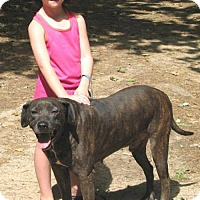 Adopt A Pet :: Brindle Pop - Cochran, GA