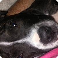 Adopt A Pet :: Merry - Sacramento, CA