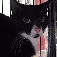 Adopt A Pet :: Cleo - Porter, TX
