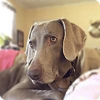 Adopt A Pet :: Izzy - Birmingham, AL