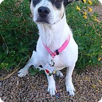 Adopt A Pet :: Skylar formerly Skye - Las Vegas, NV