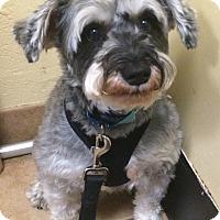 Adopt A Pet :: Spike - Oak Ridge, NJ