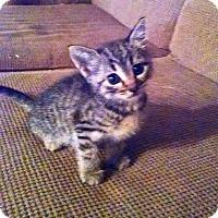 Adopt A Pet :: Ash - Marion, NC