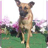 Adopt A Pet :: CHLOE see also ELSA - Marietta, GA