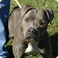 Adopt A Pet :: Savannah - Kinston, NC