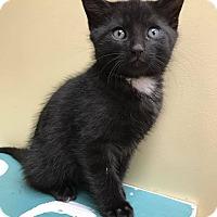 Adopt A Pet :: Bob Saget - Maryville, MO