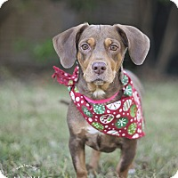 Adopt A Pet :: Dottie - Kingwood, TX