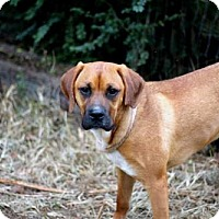 Adopt A Pet :: DUKE GRAHAM - Hagerstown, MD