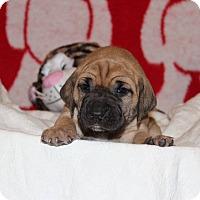 Adopt A Pet :: Bitizi - Waldorf, MD
