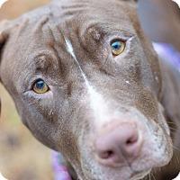 Adopt A Pet :: VEGA - Williamsburg, VA