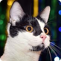Adopt A Pet :: Chloe - St. Louis, MO