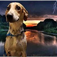 Adopt A Pet :: BESSY - Fairfield, CA