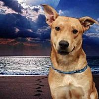 Adopt A Pet :: SGT COOPER - Fairfield, CA