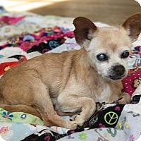 Adopt A Pet :: Jorge - San Francisco, CA
