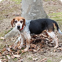 Adopt A Pet :: Knoll - Prince Frederick, MD