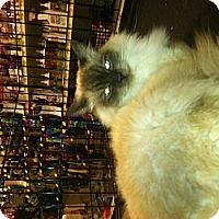Adopt A Pet :: Koko&Yumyum - Clay, NY