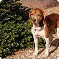 Adopt A Pet :: Leroy Henry - Phoenix, AZ