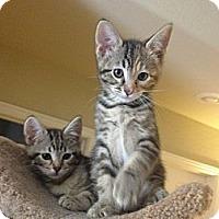 Adopt A Pet :: Marigold - Chandler, AZ
