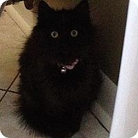 Adopt A Pet :: Emily - Monroe, GA