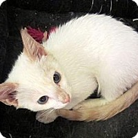 Adopt A Pet :: Finn - Arlington, VA