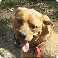 Adopt A Pet :: Buddy Boy - kennebunkport, ME