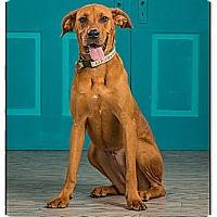 Adopt A Pet :: Delilah - Owensboro, KY