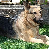 Adopt A Pet :: DANNY - Nuevo, CA