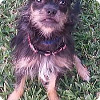 Adopt A Pet :: Nili - Orlando, FL