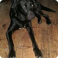 Adopt A Pet :: Chip - Charlestown, RI