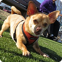 Adopt A Pet :: Paxton - Meridian, ID