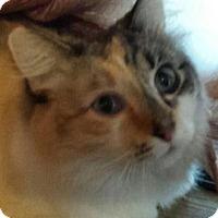 Adopt A Pet :: Jazzmin - Ennis, TX