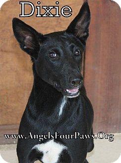 Pointer Mix Dog for adoption in Humble, Texas - DIXXIE