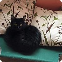 Adopt A Pet :: Pita - Erwin, TN