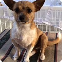 Adopt A Pet :: Sunshine - S. Pasedena, FL
