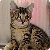 Adopt A Pet :: Rayna - East Brunswick, NJ