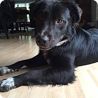 Adopt A Pet :: Hendrix - North Brunswick, NJ