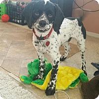 Adopt A Pet :: Rocco - Santa Barbara, CA