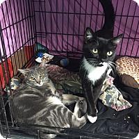 Adopt A Pet :: Frankie & Paulie - Warwick, RI