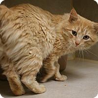 Adopt A Pet :: Bob - Salisbury, NC