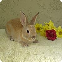 Adopt A Pet :: Ravioli - Bonita, CA