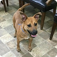 Adopt A Pet :: Charlie--in NH! - Chichester, NH