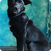 Adopt A Pet :: Batman - Waldorf, MD