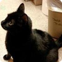 Adopt A Pet :: Willis - Worcester, MA