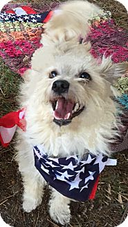 Terrier (Unknown Type, Small) Mix Dog for adoption in Los Angeles, California - GEO