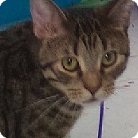 Adopt A Pet :: Jackson-ACTIVE, PLAYFUL, SWEET - Naperville, IL