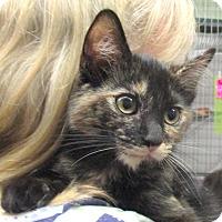 Adopt A Pet :: Foxy - Reeds Spring, MO