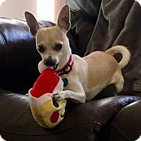 Adopt A Pet :: Chrysta - Littleton, CO