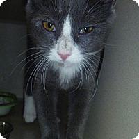 Adopt A Pet :: Davis - Hamburg, NY