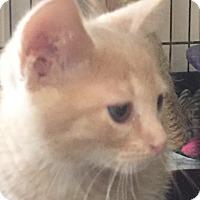 Adopt A Pet :: Rusty - Floral City, FL